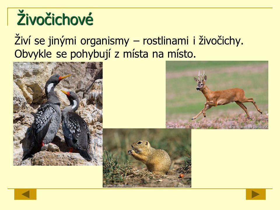 Živočichové Živí se jinými organismy – rostlinami i živočichy. Obvykle se pohybují z místa na místo.