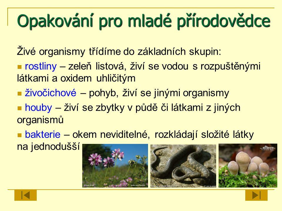 Opakování pro mladé přírodovědce Živé organismy třídíme do základních skupin: rostliny – zeleň listová, živí se vodou s rozpuštěnými látkami a oxidem