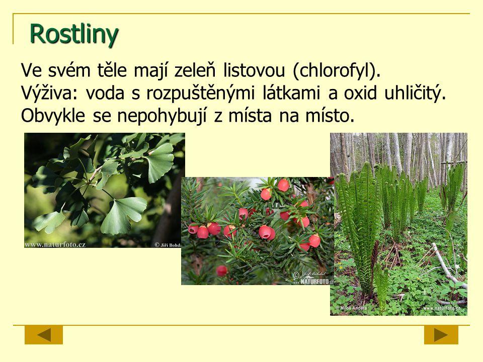 Rostliny Ve svém těle mají zeleň listovou (chlorofyl). Výživa: voda s rozpuštěnými látkami a oxid uhličitý. Obvykle se nepohybují z místa na místo.