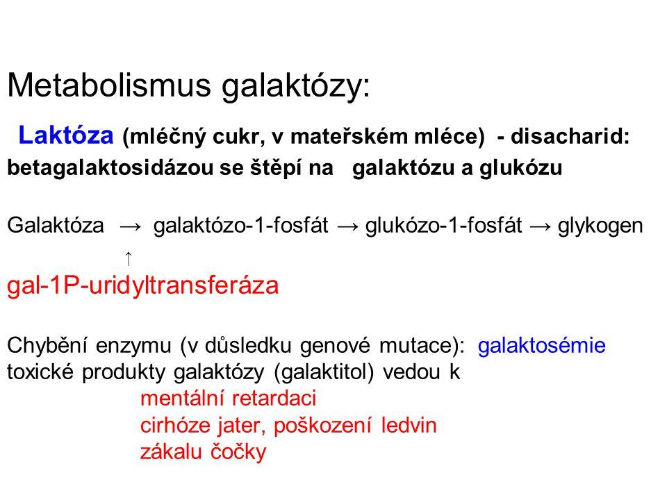 Metabolismus galaktózy: Laktóza (mléčný cukr, v mateřském mléce) - disacharid: betagalaktosidázou se štěpí na galaktózu a glukózu Galaktóza → galaktóz