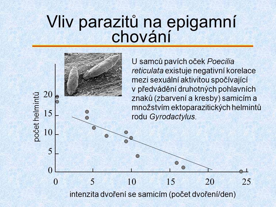 Vliv parazitů na epigamní chování 0510152025 0 5 10 15 20 intenzita dvoření se samicím (počet dvoření/den) U samců pavích oček Poecilia reticulata exi