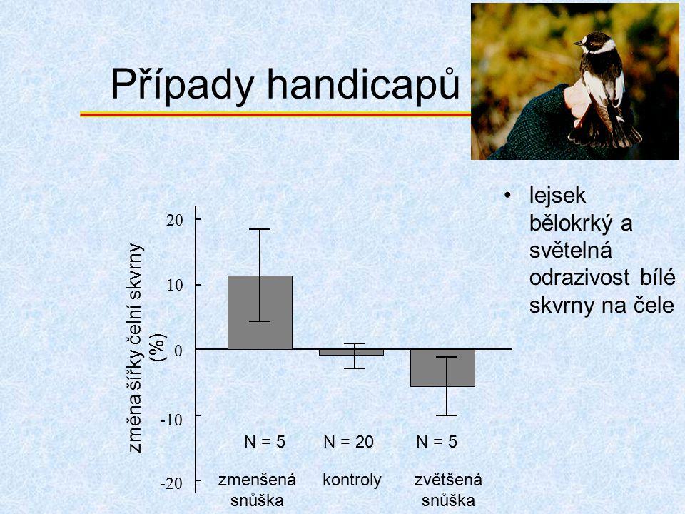 Případy handicapů lejsek bělokrký a světelná odrazivost bílé skvrny na čele zmenšená snůška kontrolyzvětšená snůška 0 10 20 -10 -20 N = 5N = 5N = 20N