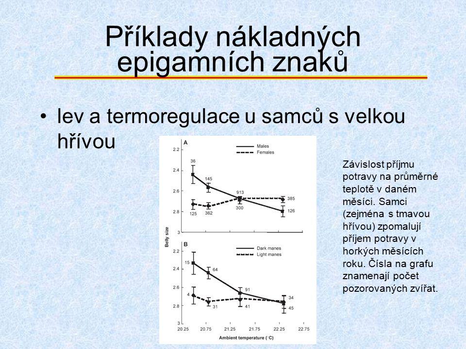 Příklady nákladných epigamních znaků lev a termoregulace u samců s velkou hřívou Závislost příjmu potravy na průměrné teplotě v daném měsíci. Samci (z