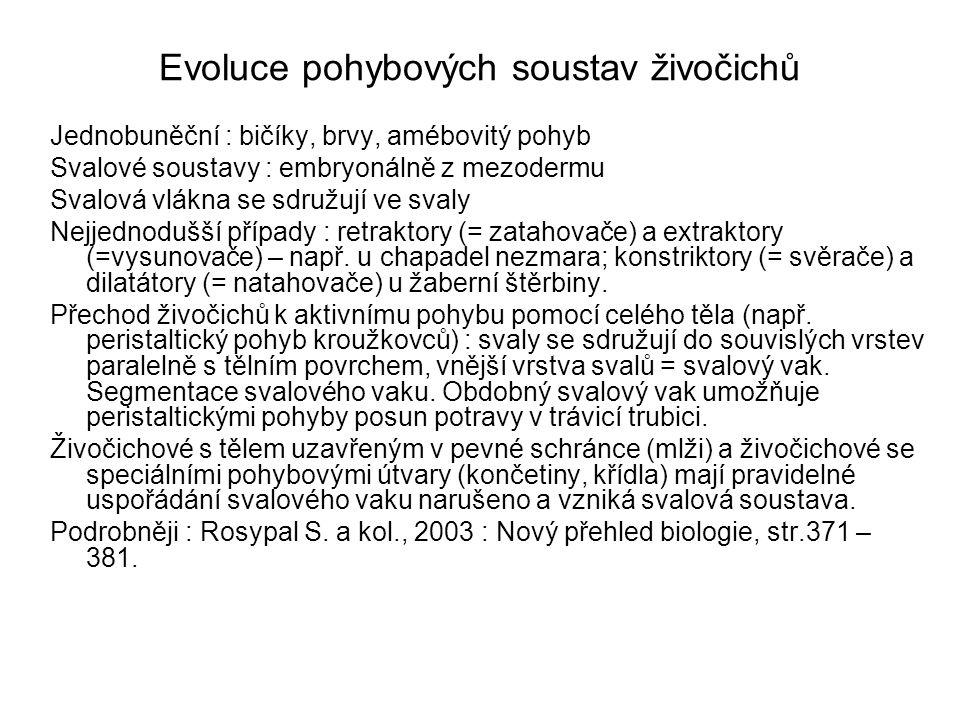 Evoluce opěrných soustav živočichů Houby : sklerity z SiO 2 nebo CaCO 3 vylučované skleroblasty Bezobratlí : vnější kostra – derivát ektodermu Ostnokožci : kostra tvořená vápnitými destičkami z mezodermu Obratlovci : pevná kostra vnitřní (převážně z mezodermu, s výjimkou žaberních oblouků a dermálních kostí viscerokrania, které vznikají z buněk neurální lišty)