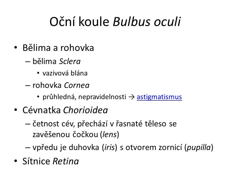 Oční koule Bulbus oculi Bělima a rohovka – bělima Sclera vazivová blána – rohovka Cornea průhledná, nepravidelnosti → astigmatismusastigmatismus Cévnatka Chorioidea – četnost cév, přechází v řasnaté těleso se zavěšenou čočkou (lens) – vpředu je duhovka (iris) s otvorem zornicí (pupilla) Sítnice Retina