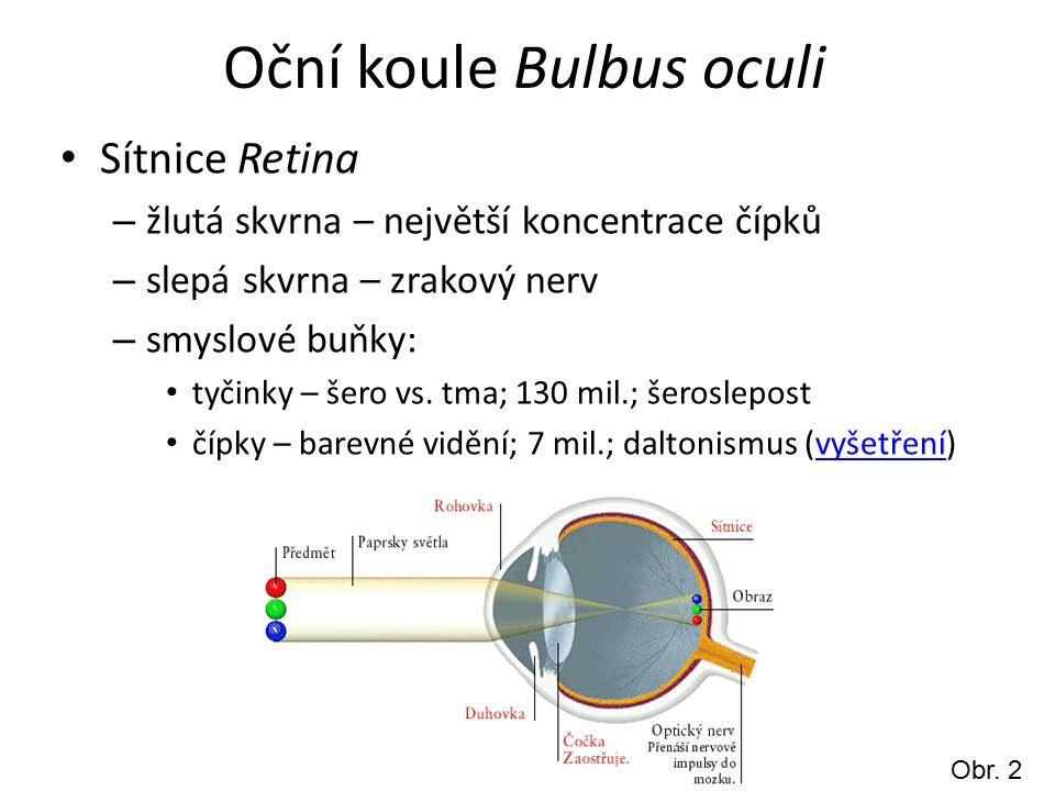 Oční koule Bulbus oculi Sítnice Retina – žlutá skvrna – největší koncentrace čípků – slepá skvrna – zrakový nerv – smyslové buňky: tyčinky – šero vs.