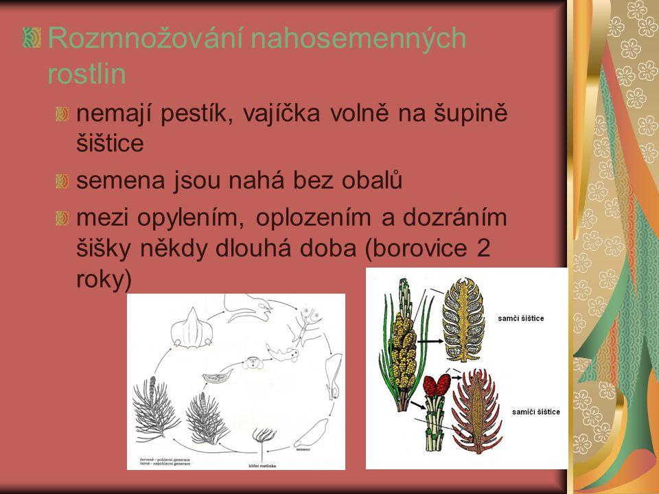 Rozmnožování nahosemenných rostlin nemají pestík, vajíčka volně na šupině šištice semena jsou nahá bez obalů mezi opylením, oplozením a dozráním šišky