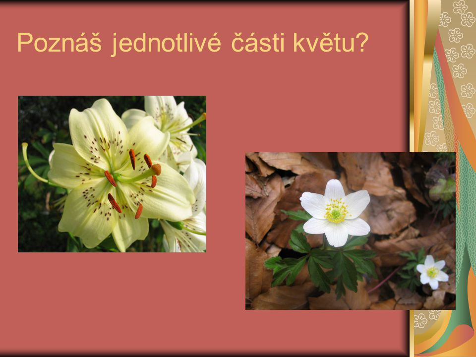 Poznáš jednotlivé části květu?