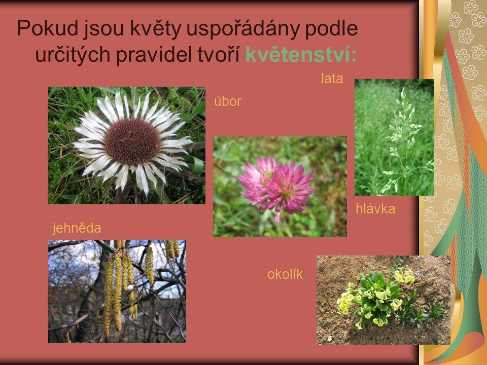 Pokud jsou květy uspořádány podle určitých pravidel tvoří květenství: úbor lata hlávka jehněda okolík