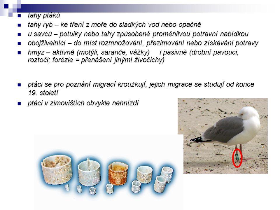 tahy ptáků tahy ptáků tahy ryb – ke tření z moře do sladkých vod nebo opačně tahy ryb – ke tření z moře do sladkých vod nebo opačně u savců – potulky