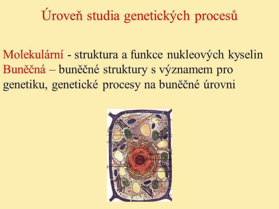 Úroveň studia genetických procesů Molekulární - struktura a funkce nukleových kyselin Buněčná – buněčné struktury s významem pro genetiku, genetické p