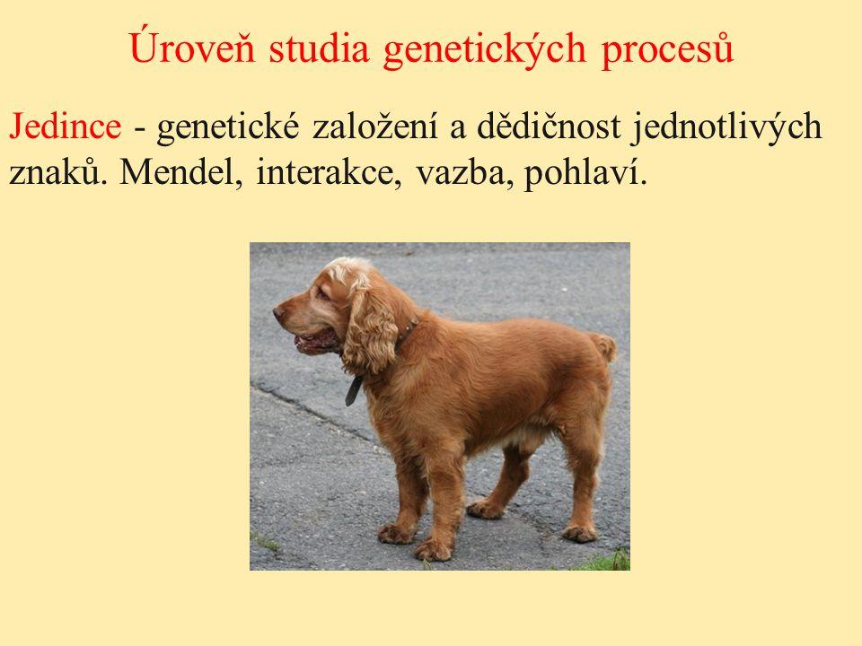 Jedince - genetické založení a dědičnost jednotlivých znaků. Mendel, interakce, vazba, pohlaví. Úroveň studia genetických procesů