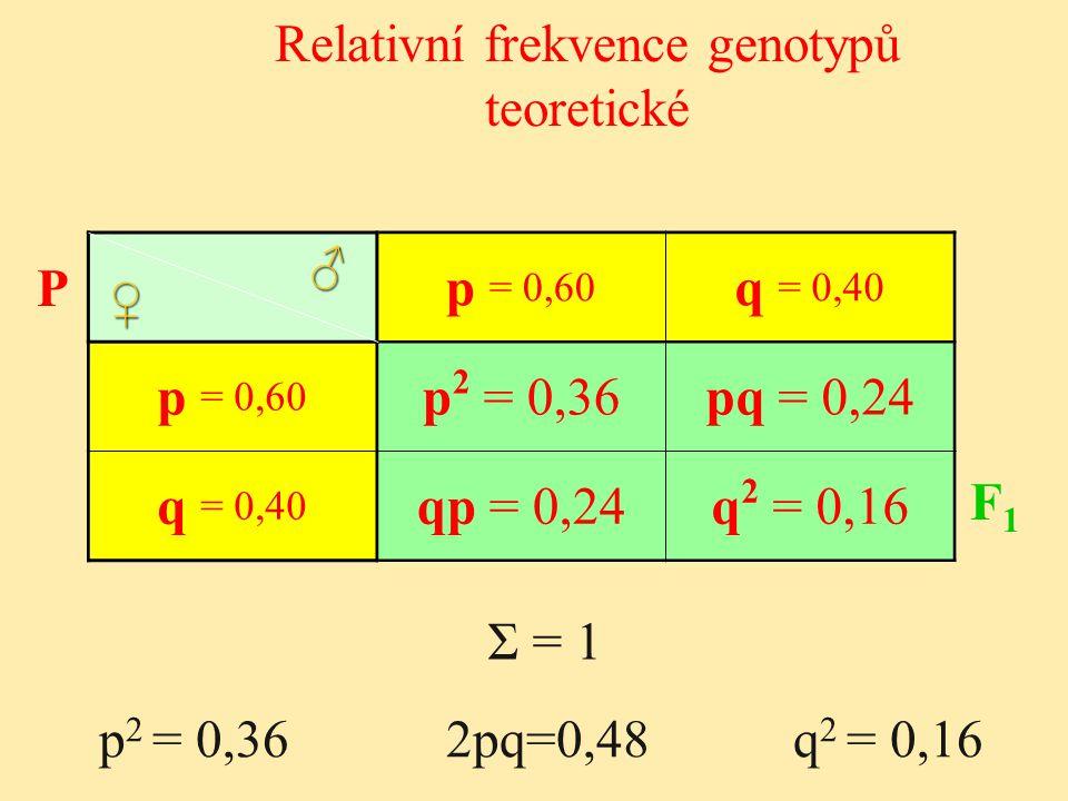 p 2 = 0,36 2pq=0,48 q 2 = 0,16 p = 0,60 q = 0,40 p = 0,60 p 2 = 0,36pq = 0,24 q = 0,40 qp = 0,24q 2 = 0,16 Σ = 1 ♂ ♀ P F1 F1 Relativní frekvence genot