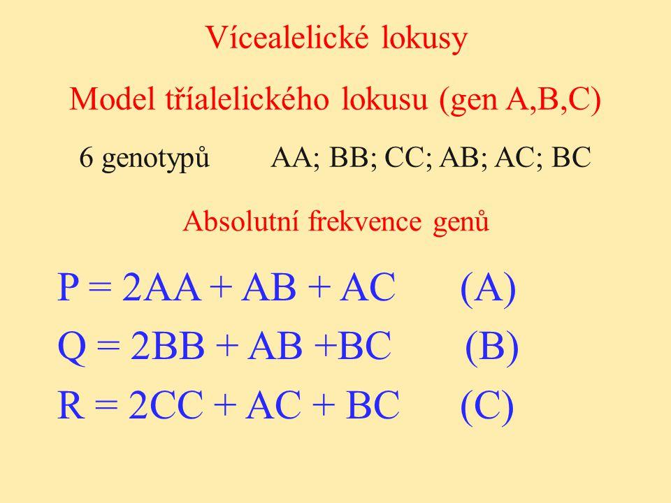 Vícealelické lokusy Absolutní frekvence genů Model tříalelického lokusu (gen A,B,C) 6 genotypů AA; BB; CC; AB; AC; BC P = 2AA + AB + AC(A) Q = 2BB + A
