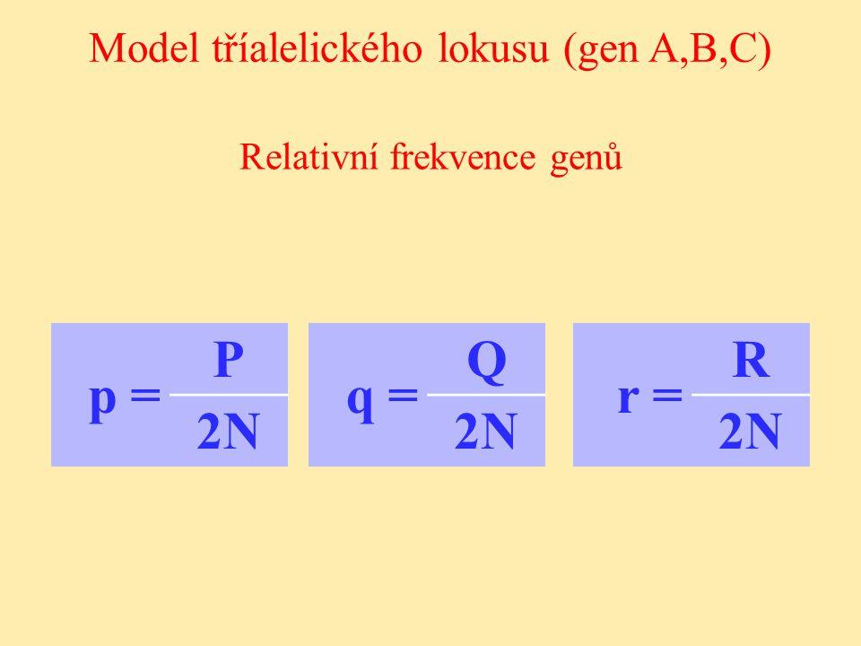 Relativní frekvence genů Model tříalelického lokusu (gen A,B,C) p = P 2N2N q = Q 2N2N r = R 2N2N