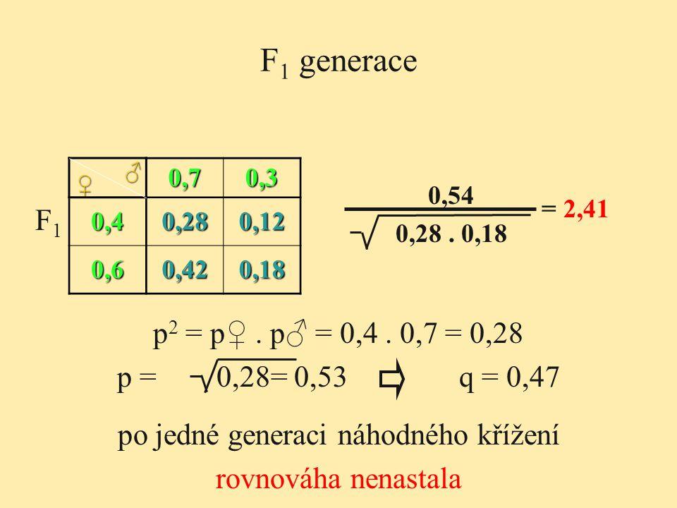 F 1 generace 0,70,3 0,40,280,12 0,60,420,18 ♀ ♂ 0,54 0,28. 0,18 = 2,41 F1F1 po jedné generaci náhodného křížení rovnováha nenastala p 2 = p♀. p♂ = 0,4