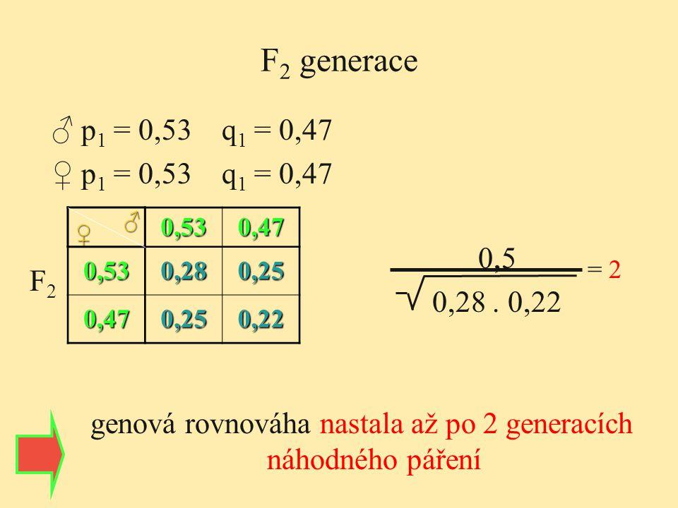 F 2 generace 0,530,47 0,530,280,25 0,470,250,22 ♀ ♂ 0,5 0,28. 0,22 = 2 genová rovnováha nastala až po 2 generacích náhodného páření F2F2 ♂ p 1 = 0,53