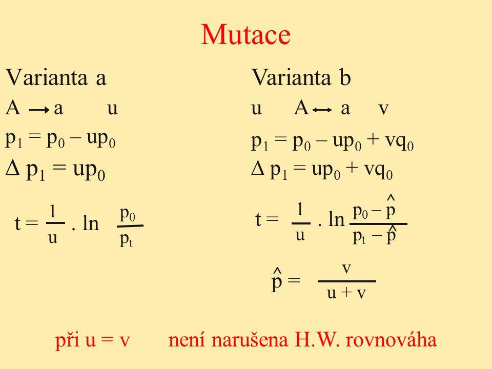 1 p 0 u p t Varianta a A a u p 1 = p 0 – up 0 ∆ p 1 = up 0 Mutace při u = v není narušena H.W. rovnováha t =. ln Varianta b u A a v p 1 = p 0 – up 0 +