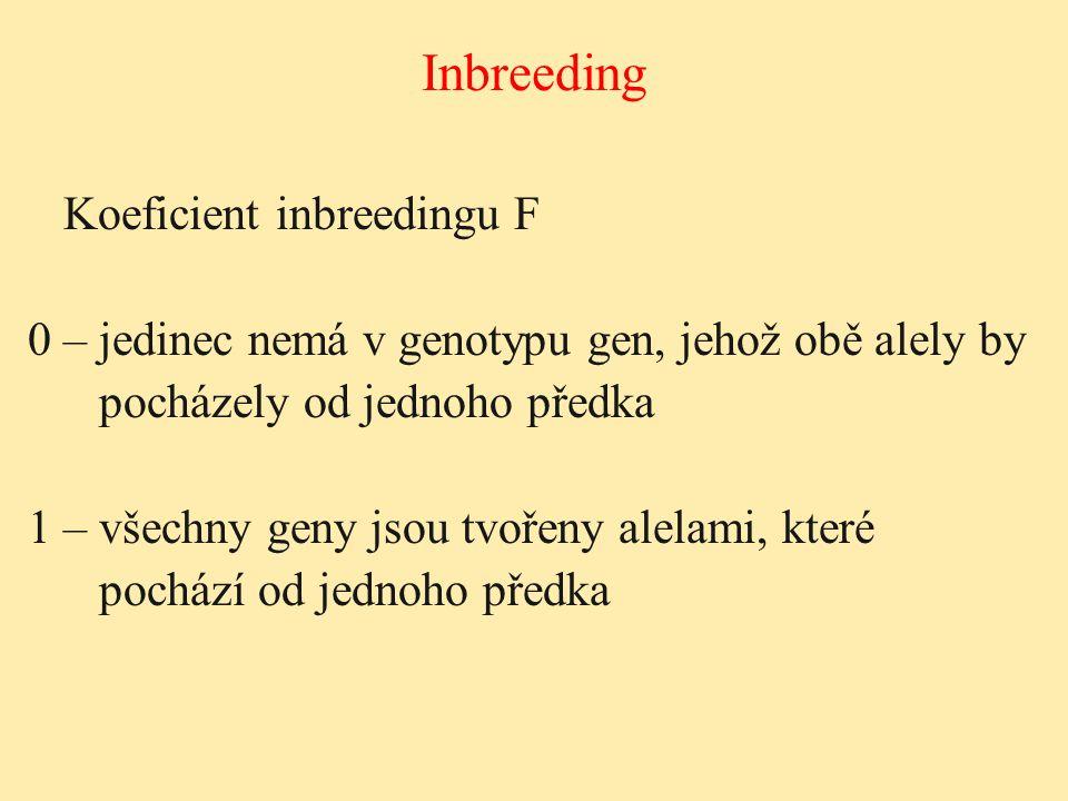 Inbreeding Koeficient inbreedingu F 0 – jedinec nemá v genotypu gen, jehož obě alely by pocházely od jednoho předka 1 – všechny geny jsou tvořeny alel