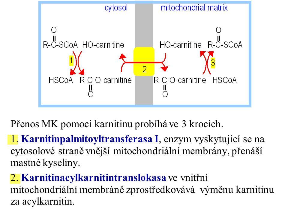 Přenos MK pomocí karnitinu probíhá ve 3 krocích. 1. Karnitinpalmitoyltransferasa I, enzym vyskytující se na cytosolové straně vnější mitochondriální m
