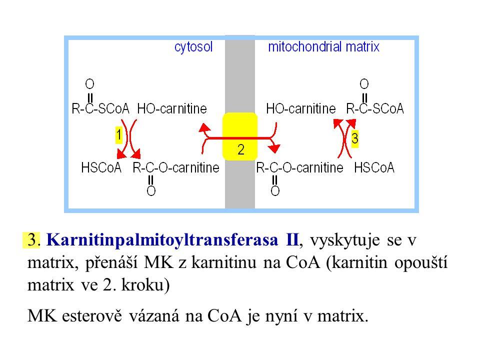 3. Karnitinpalmitoyltransferasa II, vyskytuje se v matrix, přenáší MK z karnitinu na CoA (karnitin opouští matrix ve 2. kroku) MK esterově vázaná na C