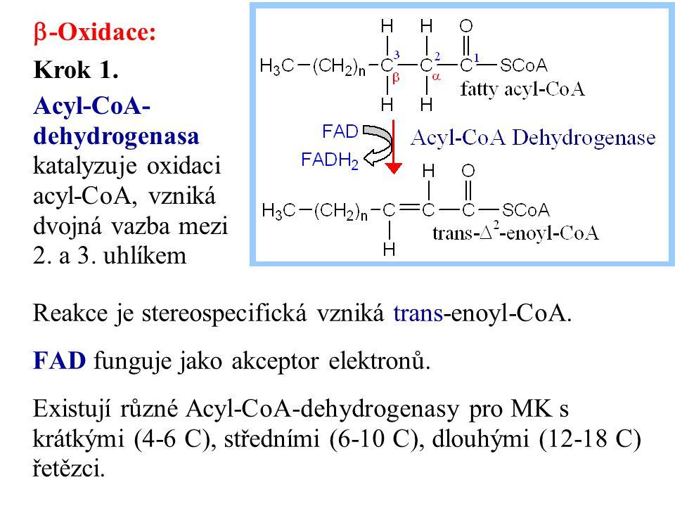 Reakce je stereospecifická vzniká trans-enoyl-CoA. FAD funguje jako akceptor elektronů. Existují různé Acyl-CoA-dehydrogenasy pro MK s krátkými (4-6 C