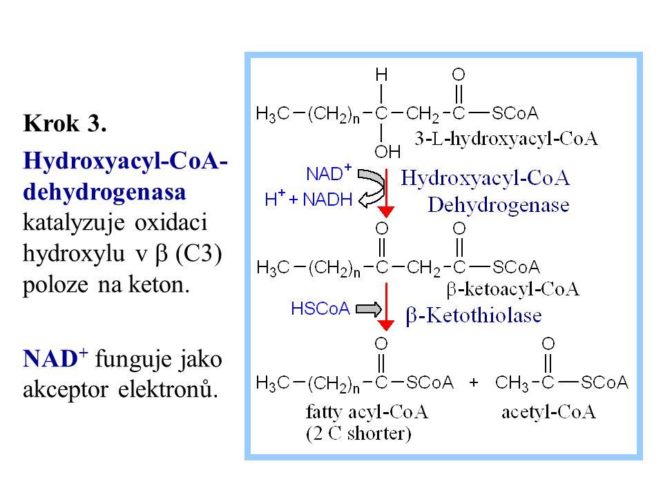 Krok 3. Hydroxyacyl-CoA- dehydrogenasa katalyzuje oxidaci hydroxylu v  (C3) poloze na keton. NAD + funguje jako akceptor elektronů.