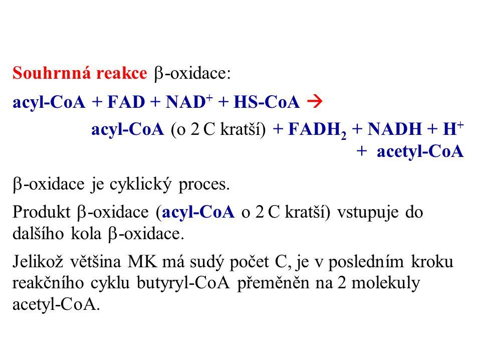 Souhrnná reakce  -oxidace: acyl-CoA + FAD + NAD + + HS-CoA  acyl-CoA (o 2 C kratší) + FADH 2 + NADH + H + + acetyl-CoA  -oxidace je cyklický proces