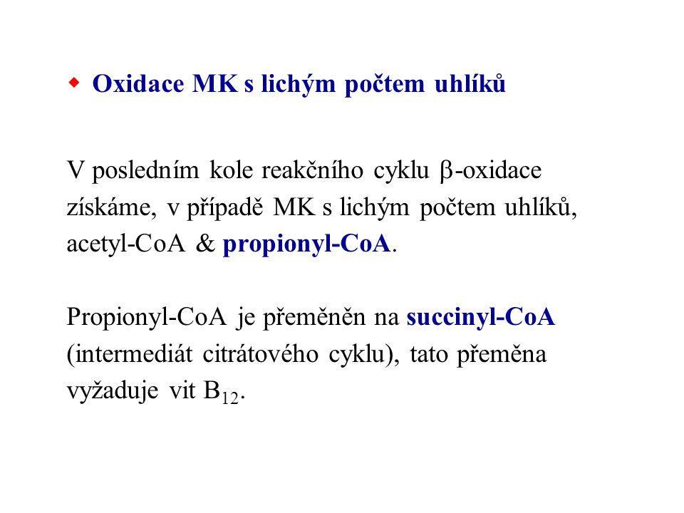 Oxidace MK s lichým počtem uhlíků V posledním kole reakčního cyklu  -oxidace získáme, v případě MK s lichým počtem uhlíků, acetyl-CoA & propionyl-C