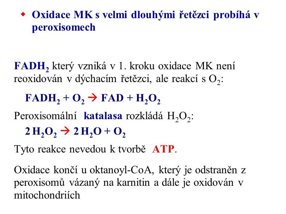  Oxidace MK s velmi dlouhými řetězci probíhá v peroxisomech FADH 2 který vzniká v 1. kroku oxidace MK není reoxidován v dýchacím řetězci, ale reakcí