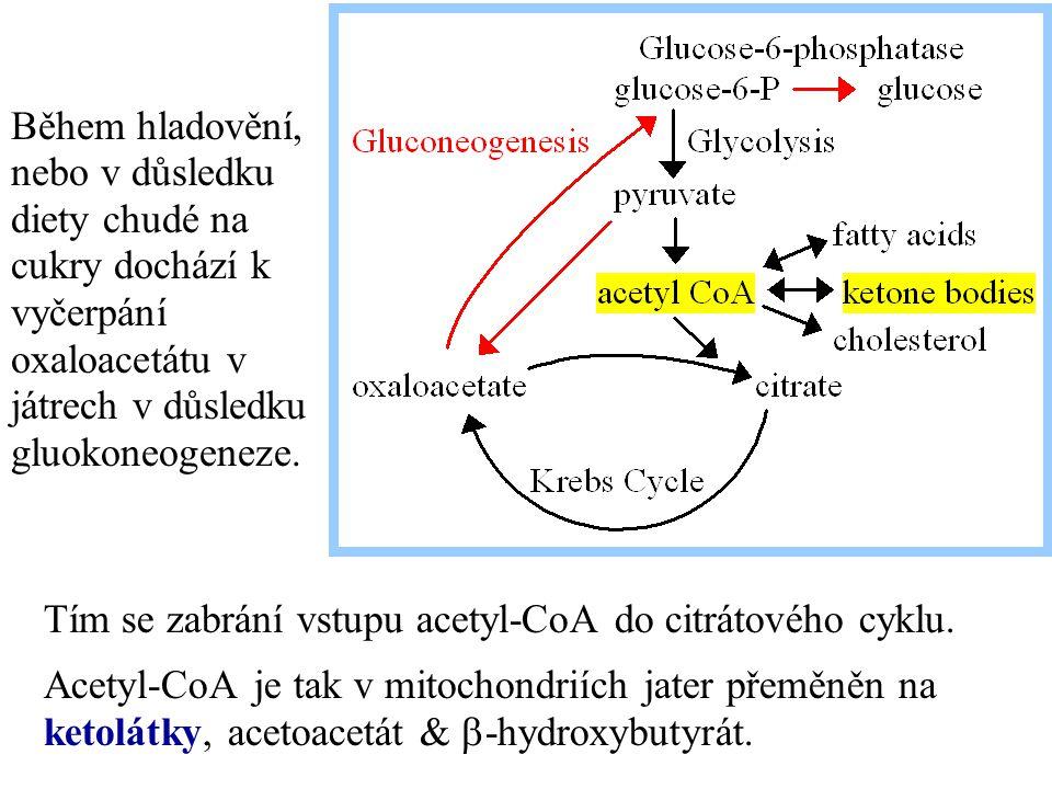 Tím se zabrání vstupu acetyl-CoA do citrátového cyklu. Acetyl-CoA je tak v mitochondriích jater přeměněn na ketolátky, acetoacetát &  -hydroxybutyrát