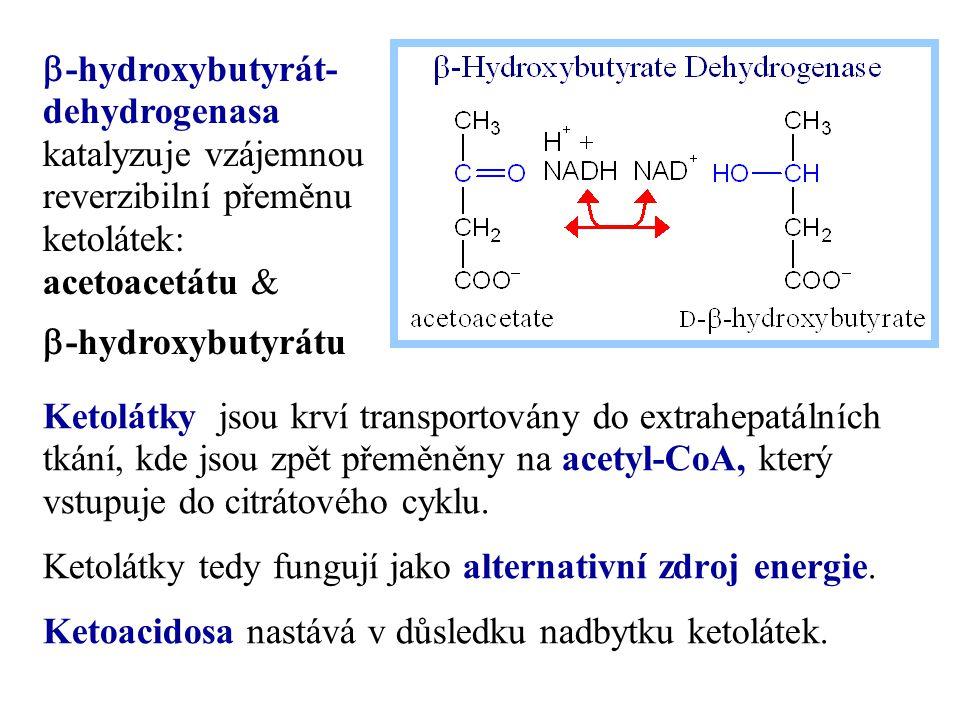 Ketolátky jsou krví transportovány do extrahepatálních tkání, kde jsou zpět přeměněny na acetyl-CoA, který vstupuje do citrátového cyklu. Ketolátky te