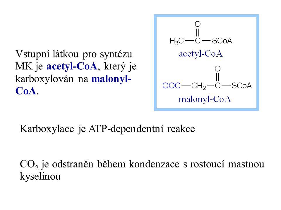 Karboxylace je ATP-dependentní reakce CO 2 je odstraněn během kondenzace s rostoucí mastnou kyselinou Vstupní látkou pro syntézu MK je acetyl-CoA, kte