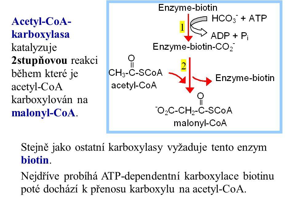 Stejně jako ostatní karboxylasy vyžaduje tento enzym biotin. Nejdříve probíhá ATP-dependentní karboxylace biotinu poté dochází k přenosu karboxylu na