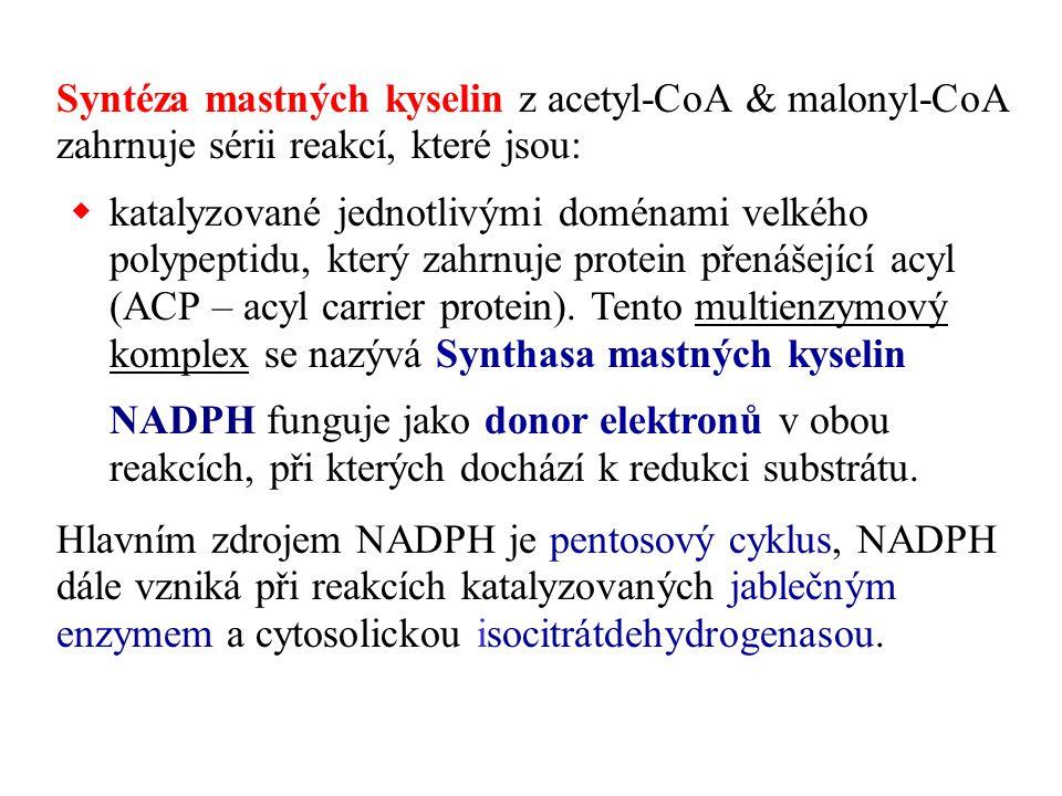 Syntéza mastných kyselin z acetyl-CoA & malonyl-CoA zahrnuje sérii reakcí, které jsou:  katalyzované jednotlivými doménami velkého polypeptidu, který