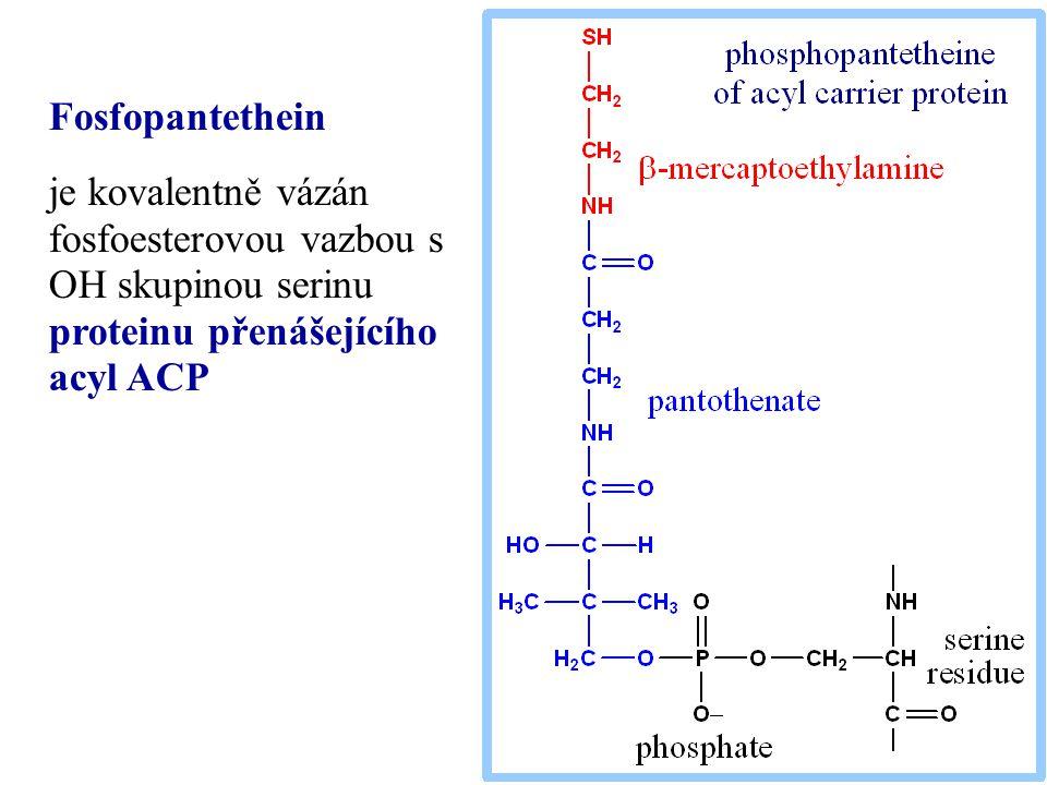 Fosfopantethein je kovalentně vázán fosfoesterovou vazbou s OH skupinou serinu proteinu přenášejícího acyl ACP