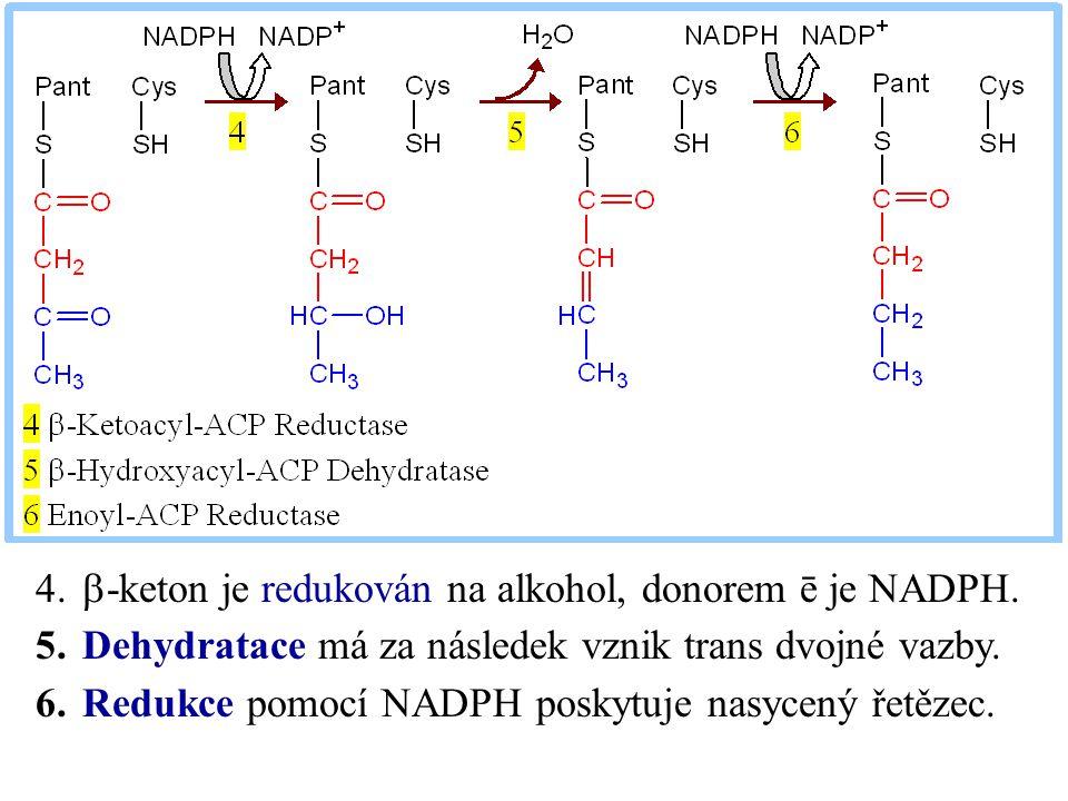  -keton je redukován na alkohol, donorem ē je NADPH. 5.Dehydratace má za následek vznik trans dvojné vazby. 6.Redukce pomocí NADPH poskytuje nasyce