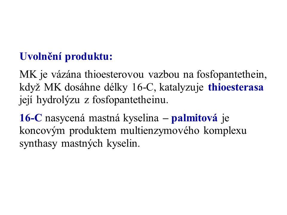 Uvolnění produktu: MK je vázána thioesterovou vazbou na fosfopantethein, když MK dosáhne délky 16-C, katalyzuje thioesterasa její hydrolýzu z fosfopan
