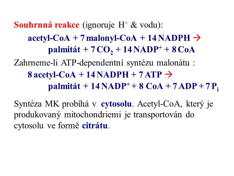 Souhrnná reakce (ignoruje H + & vodu): acetyl-CoA + 7 malonyl-CoA + 14 NADPH  palmitát + 7 CO 2 + 14 NADP + + 8 CoA Zahrneme-li ATP-dependentní synté
