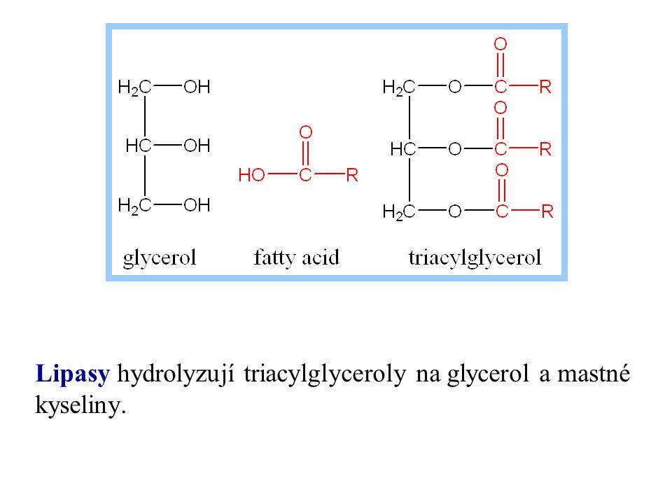 Lipasy hydrolyzují triacylglyceroly na glycerol a mastné kyseliny.