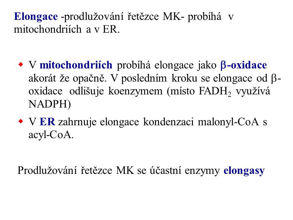 Elongace -prodlužování řetězce MK- probíhá v mitochondriích a v ER.  V mitochondriích probíhá elongace jako  -oxidace akorát že opačně. V posledním