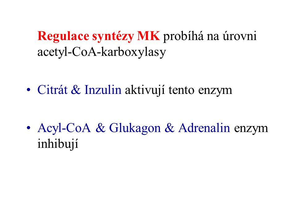 Regulace syntézy MK probíhá na úrovni acetyl-CoA-karboxylasy Citrát & Inzulin aktivují tento enzym Acyl-CoA & Glukagon & Adrenalin enzym inhibují