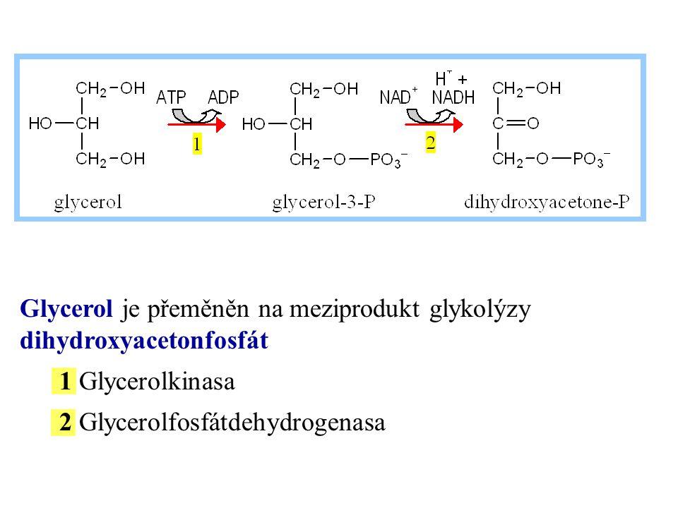 Glycerol je přeměněn na meziprodukt glykolýzy dihydroxyacetonfosfát 1 Glycerolkinasa 2 Glycerolfosfátdehydrogenasa
