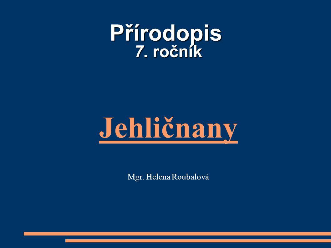 Přírodopis 7. ročník Jehličnany Mgr. Helena Roubalová