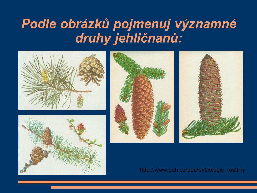 Podle obrázků pojmenuj významné druhy jehličnanů: http://www.guh.cz/edu/bi/biologie_rostliny