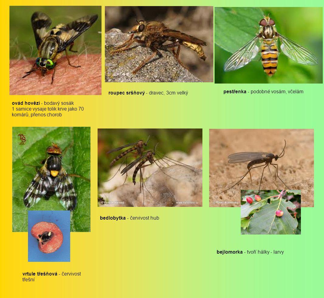 ovád hovězí - bodavý sosák 1 samice vysaje tolik krve jako 70 komárů, přenos chorob roupec sršňový - dravec, 3cm velký pestřenka - podobné vosám, včelám vrtule třešňová - červivost třešní bedlobytka - červivost hub bejlomorka - tvoří hálky - larvy