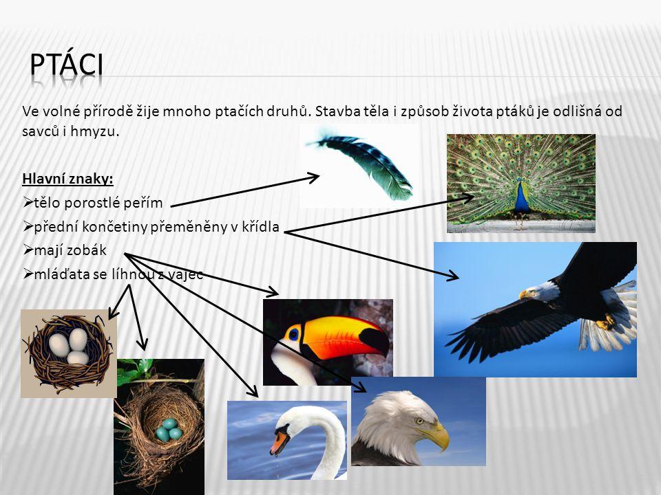 Ve volné přírodě žije mnoho ptačích druhů.