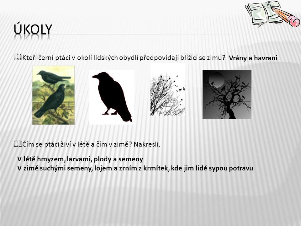  Kteří černí ptáci v okolí lidských obydlí předpovídají blížící se zimu.