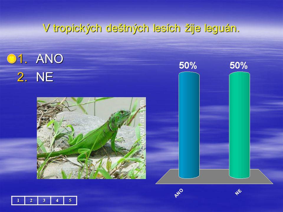 V tropických deštných lesích žije leguán. 12345 1.ANO 2.NE
