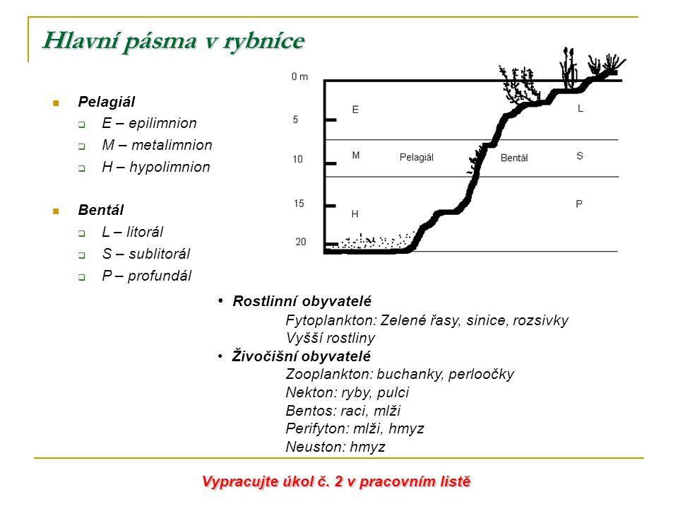 Hlavní pásma v rybníce Pelagiál  E – epilimnion  M – metalimnion  H – hypolimnion Bentál  L – litorál  S – sublitorál  P – profundál Rostlinní o